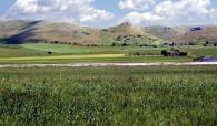 Murge hills, near Spinazzola (Barletta, Andria and Trani Province - Apulia)